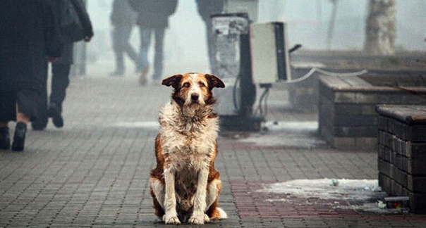 Смертельно опасная любовь собаки отправила жителя Германии на тот свет