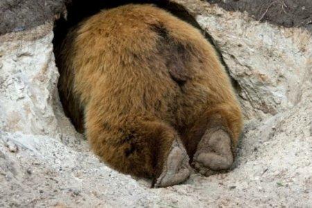 Целый месяц мужчина пролежал в берлоге с медведем и остался жив